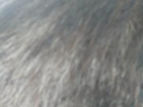 喝基因肽头发黑了
